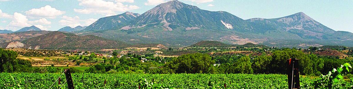 Mt Lamborn vineyards